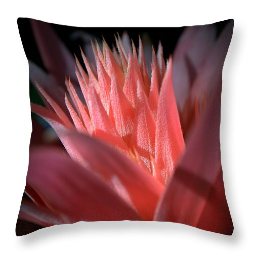 Pink Throw Pillow featuring the photograph Pink Bromeliad by Nathan Abbott