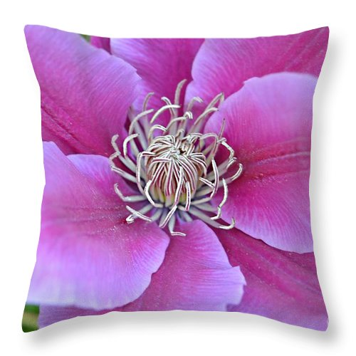 Clematis Macro Throw Pillow featuring the photograph Pink Clematis Beauty by Peggy Franz