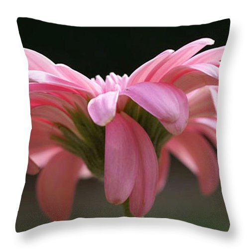 Pink Throw Pillow featuring the photograph Pink Daisy 1 by Carol Lynch