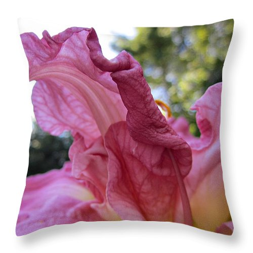 Zona Rosa Daylily Throw Pillow featuring the photograph Pink Daylily Petal by MTBobbins Photography