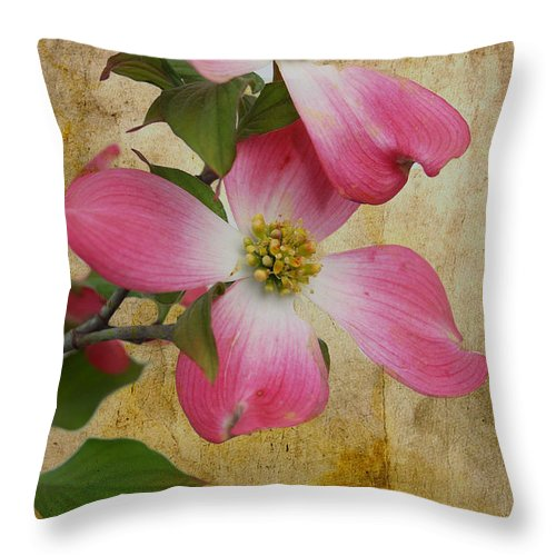 Pink Dogwood Bloom Throw Pillow featuring the photograph Pink Dogwood Bloom by Todd Hostetter