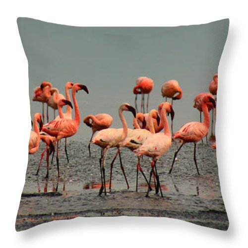 Flamingo Throw Pillow featuring the photograph Pink Famingo by Amanda Stadther