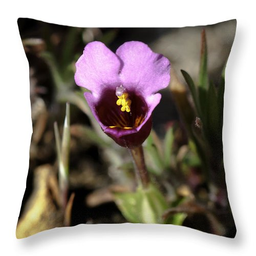 Pink Throw Pillow featuring the photograph Pink Flower by Betty Depee