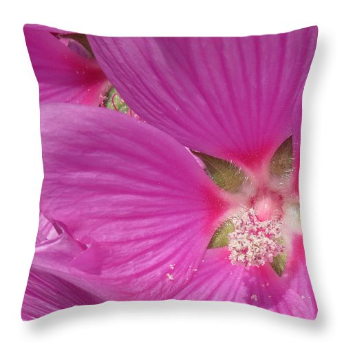 Tree Mallow Rosea Throw Pillow featuring the photograph Lavatera Rosea by John Topman