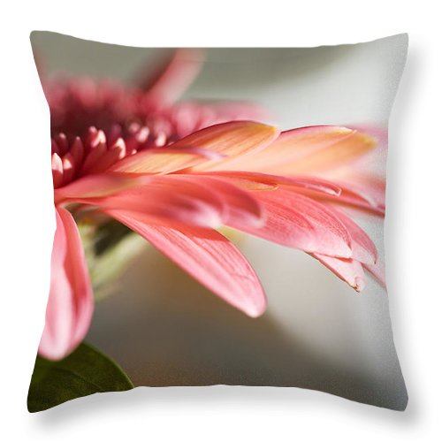Pink Throw Pillow featuring the photograph Pink Gerber Daisy by Marilyn Hunt