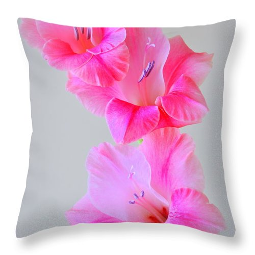 Plant Throw Pillow featuring the photograph Pink Gladiola by Nathan Abbott