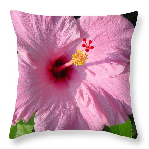 Pink Hibiscus Throw Pillow featuring the photograph Pink Hibiscus by Suzanne Gaff