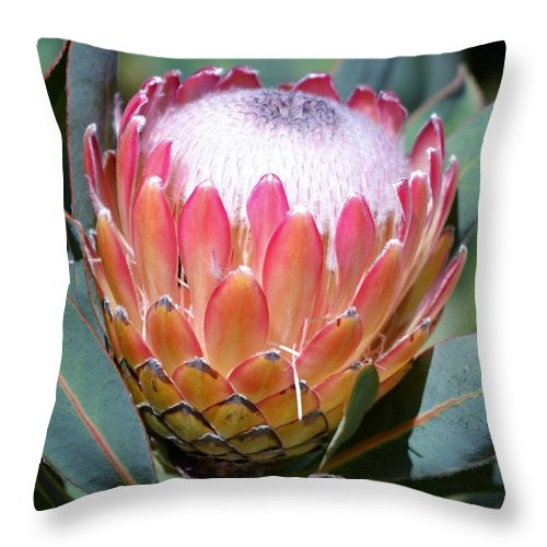 Pink Ice Throw Pillow featuring the photograph Pink Ice Protea by Werner Lehmann