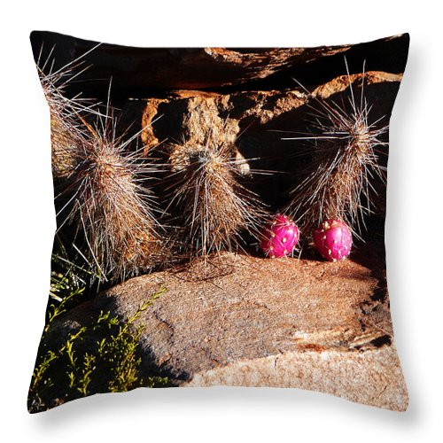 Prickly Throw Pillow featuring the photograph Pink Lady Cactus by Xueling Zou