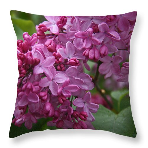Lilacs Throw Pillow featuring the photograph Pink Lilacs by Elizabeth Rose
