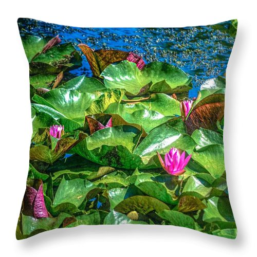 Lilly Flowers Throw Pillow featuring the photograph Pink Lilly Flowers And Pads by Peggy Franz