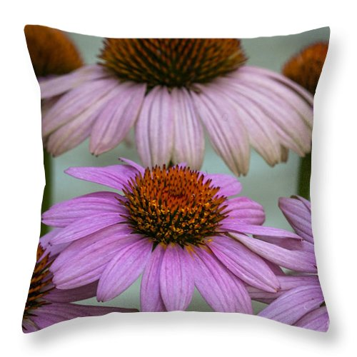 Prairie Splendor Coneflower Throw Pillow featuring the photograph Pink Majesty by Dale Powell