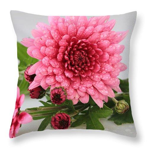 Pink Mums Still Life Throw Pillow featuring the photograph Pink Mums by Rachel Cohen