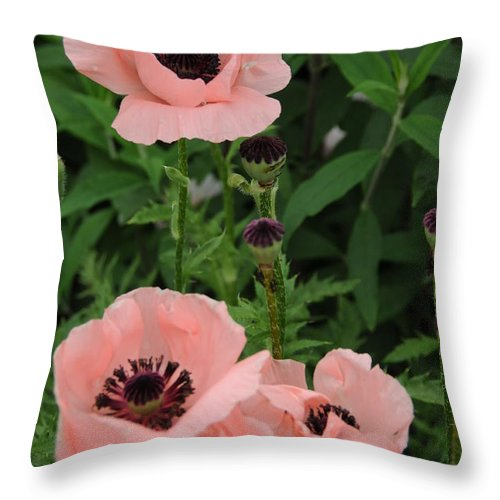 Pink Throw Pillow featuring the photograph Pink On The Bridge Of Flowers by Brian Hoover