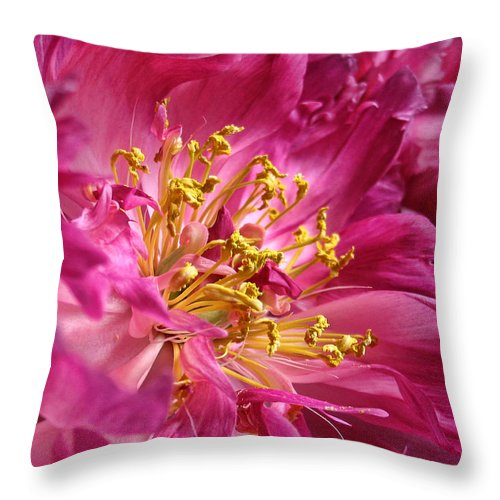 Peony Throw Pillow featuring the photograph Pink Peony Flower Macro by Jennie Marie Schell