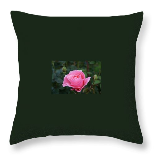 Bud Throw Pillow featuring the photograph Pink Rose Bud I by Jacqueline Russell