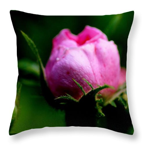 Flower Throw Pillow featuring the photograph Pink Rose Bud by Kathleen Struckle