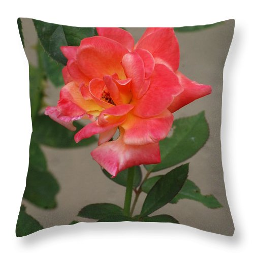 Flower Throw Pillow featuring the photograph Pink Rose by Mark McReynolds