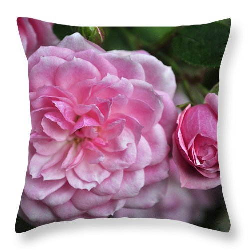 Camellia Throw Pillow featuring the photograph Pink Rose Petals by Tikvah's Hope