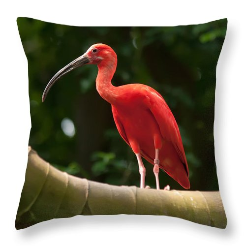 Animal Throw Pillow featuring the photograph Pink Tropical Bird by Alex Grichenko