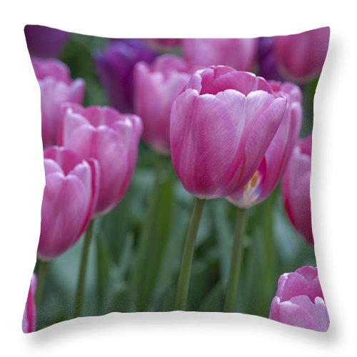 Dutch Throw Pillow featuring the photograph Pinks And Purples by Juli Scalzi