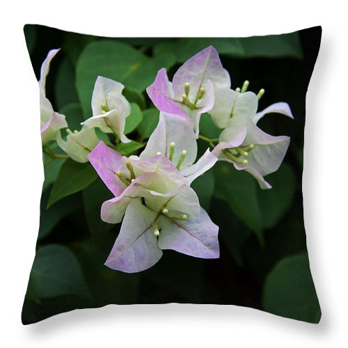 White Throw Pillow featuring the photograph Pinky White Bougainvillea by Leanne Lei