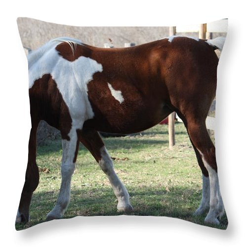 Horse Throw Pillow featuring the photograph Pinto by Jeff Tuten