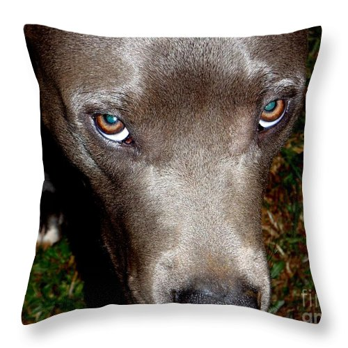 Brown Throw Pillow featuring the photograph Pit Bull - 1 by Mary Deal