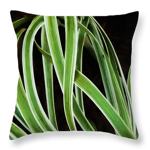 Green Throw Pillow featuring the photograph Plant Abstract by Gary Slawsky