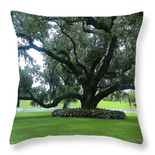Tree Throw Pillow featuring the photograph Plantation Tree by Jennifer Lavigne