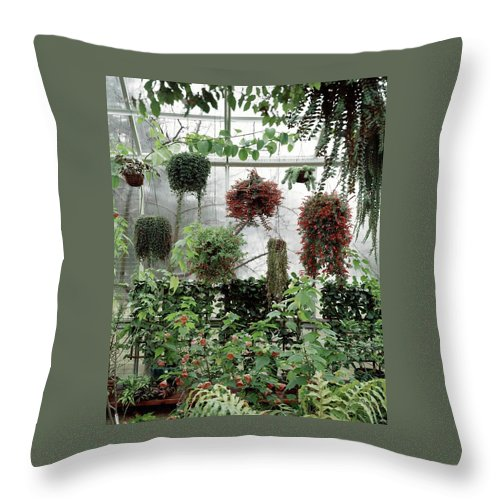 Plants Hanging In A Greenhouse Throw Pillow