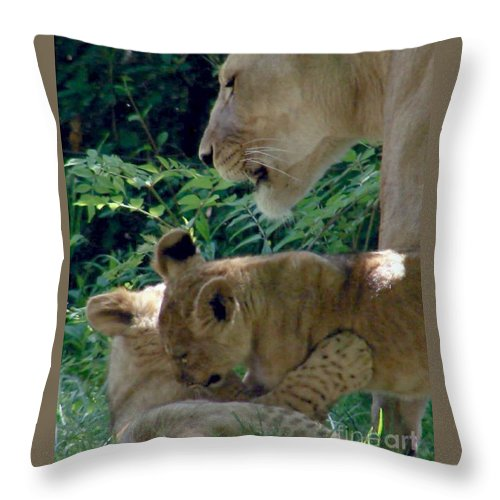 Donna Cavanaugh Throw Pillow featuring the photograph Playful Cubs by Donna Cavanaugh