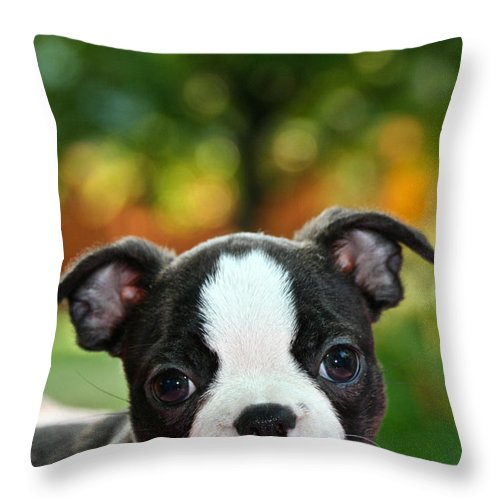 Animal Throw Pillow featuring the photograph Please Love Me by Susan Herber