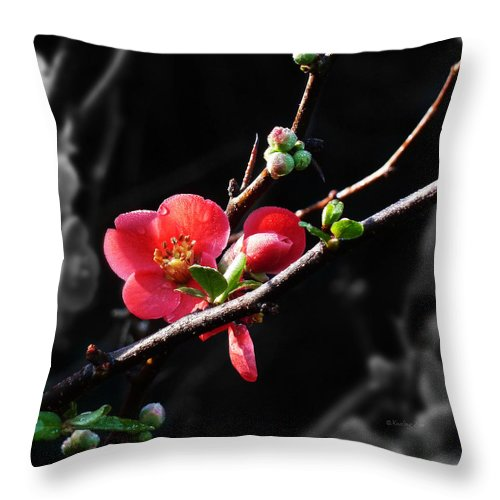 Morning Throw Pillow featuring the photograph Plum Blossom 3 by Xueling Zou