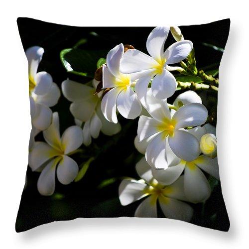 Christi Kraft Throw Pillow featuring the photograph Plumeria Glow by Christi Kraft