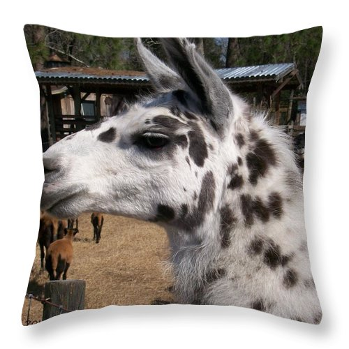 #rare Throw Pillow featuring the photograph Polka Dot Llama Pogo Rules by Belinda Lee