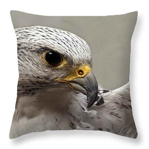 Point Defiance Gryfalcon Throw Pillow featuring the photograph Point Defiance Gryfalcon by Wes and Dotty Weber