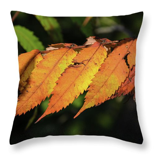 Usa Throw Pillow featuring the photograph Poison Sumac Golden Kickoff To Fall Colors by LeeAnn McLaneGoetz McLaneGoetzStudioLLCcom