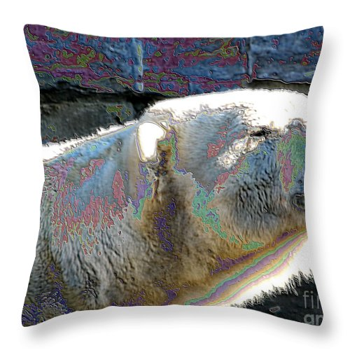 Bear Throw Pillow featuring the photograph Polar Bear With Enameled Effect by Rose Santuci-Sofranko