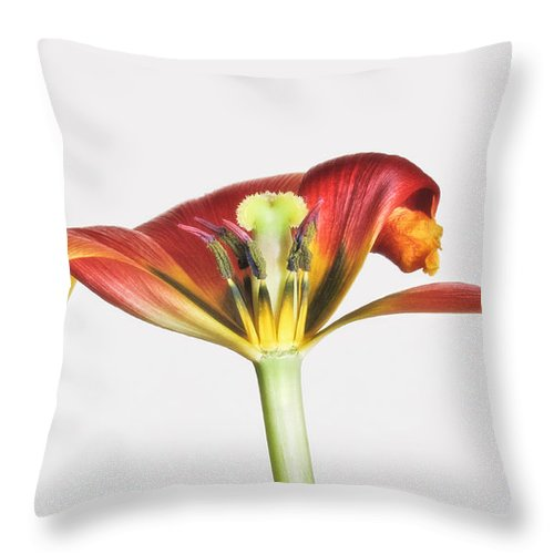 Bloom Throw Pillow featuring the photograph Pollen And Curls by David and Carol Kelly