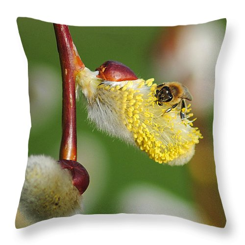 Pollen Throw Pillow featuring the photograph Pollen Feast by Frozen in Time Fine Art Photography