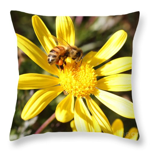 Bee Throw Pillow featuring the photograph Pollen-laden Bee On Yellow Daisy by Carol Groenen