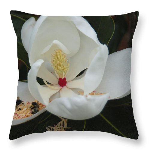 Flower Throw Pillow featuring the photograph Pollen Party by Suzanne Gaff