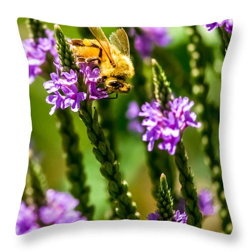 Bee Throw Pillow featuring the photograph Pollinating Bee by Optical Playground By MP Ray
