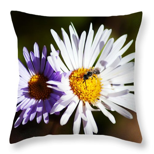 Wildflower Throw Pillow featuring the photograph Pollination by Brian Kerls