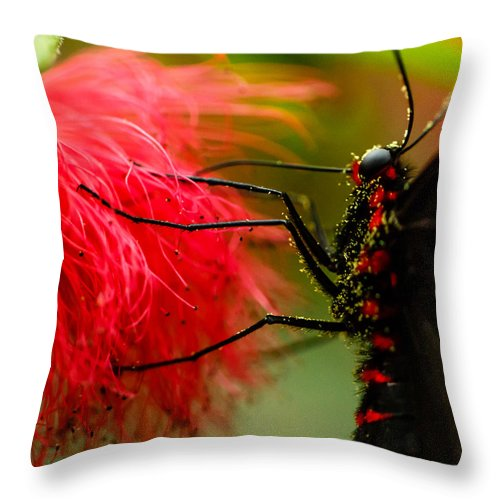 Nature Throw Pillow featuring the photograph Pollination by Darby Donaho