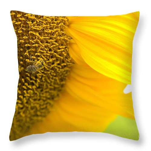 Bee Throw Pillow featuring the photograph Pollination On Sunflower by Christopher Boswell