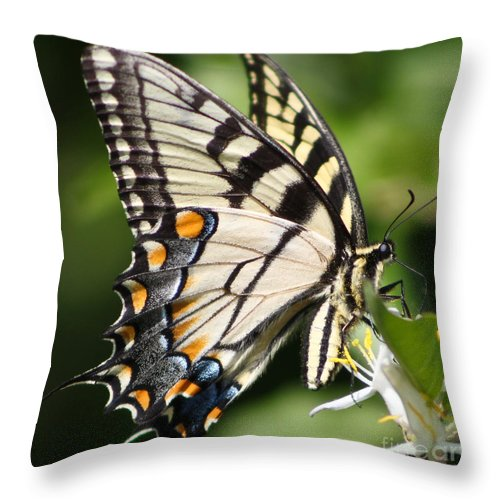 Christian Throw Pillow featuring the photograph Polychromatic Beauty by Anita Oakley