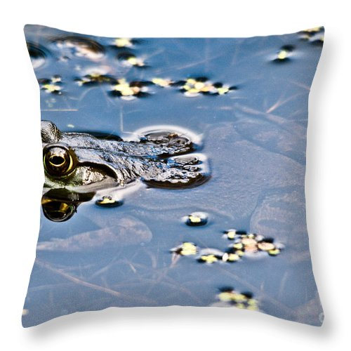 Frog Throw Pillow featuring the photograph Pond Dweller by Cheryl Baxter