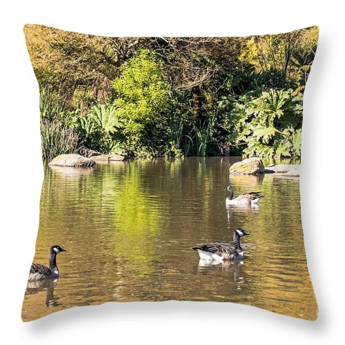 Birds Throw Pillow featuring the photograph Pond Geese by Kate Brown